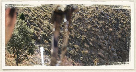 cabras-1_75a64c311f74631dd1b48395a474fee1